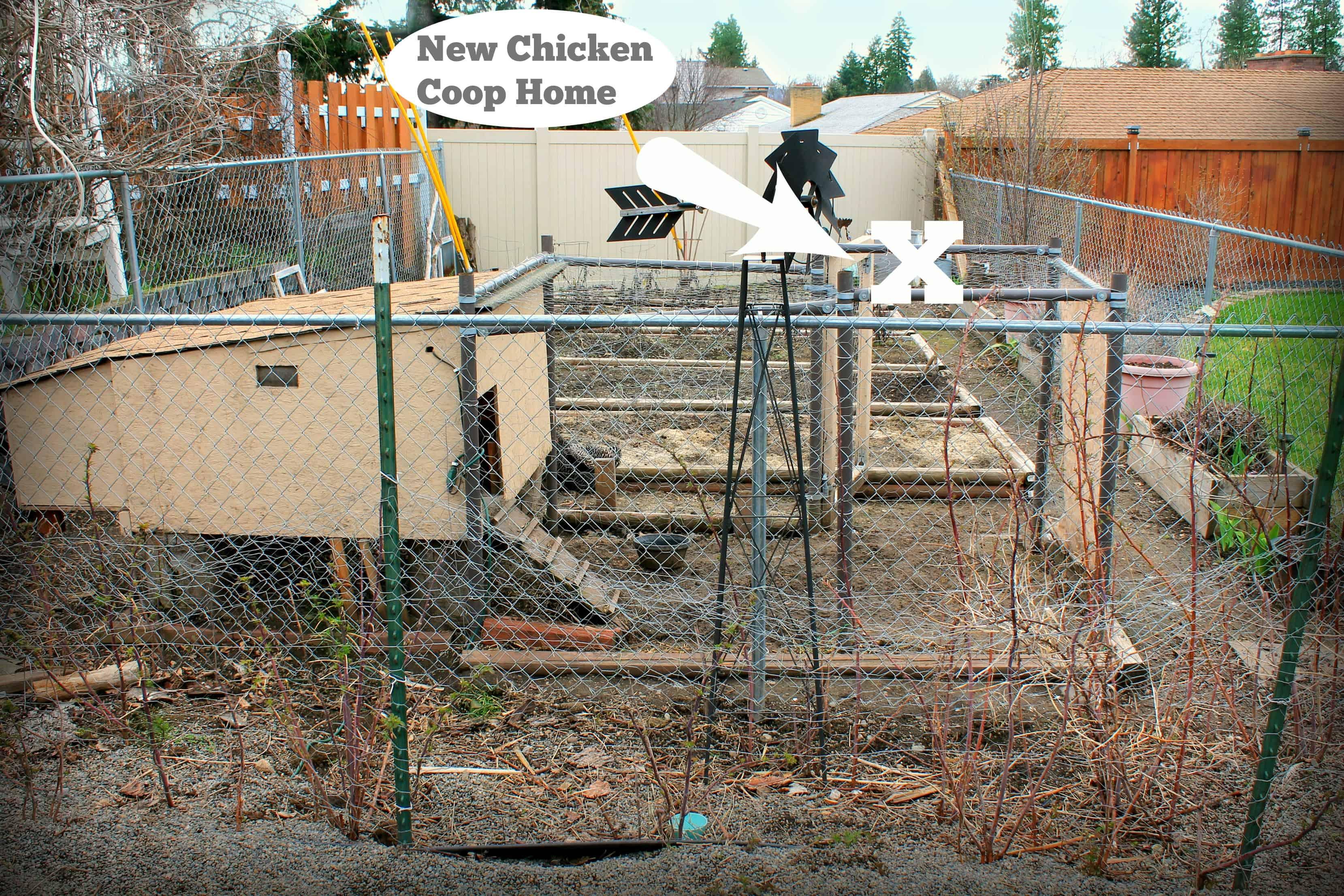 chicken coop, chickens