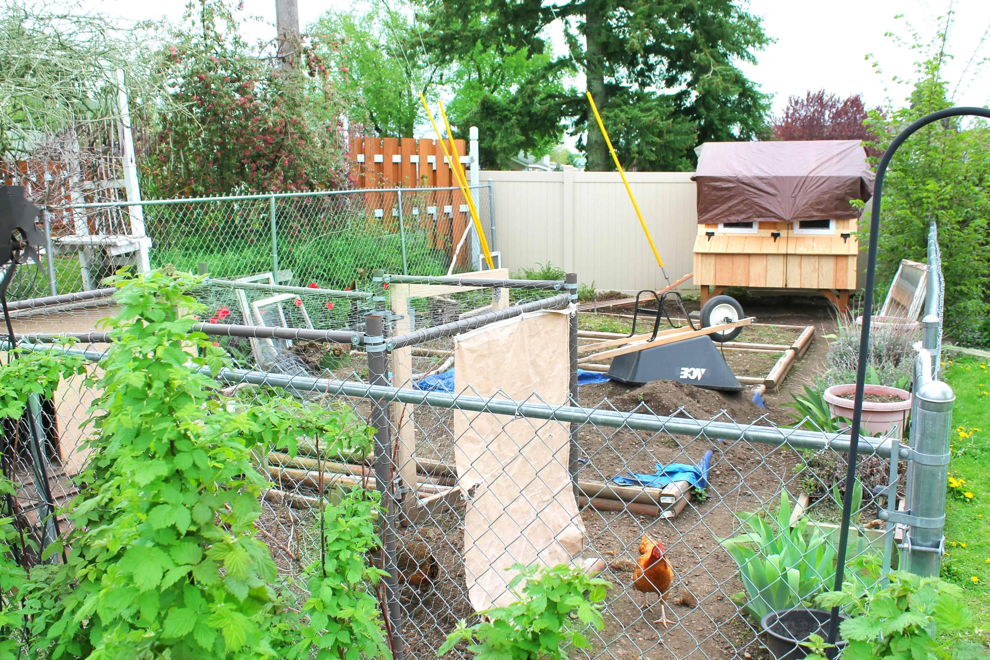 gardening, planting, chickens, garden,