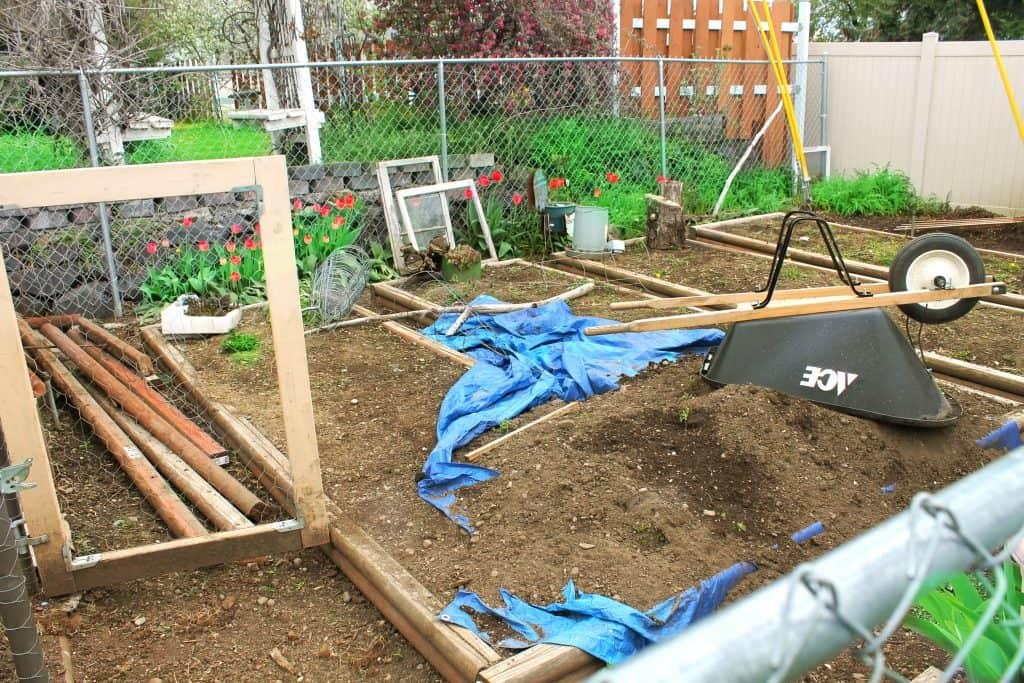 Gardening, planting, garden, chickens, vegetables