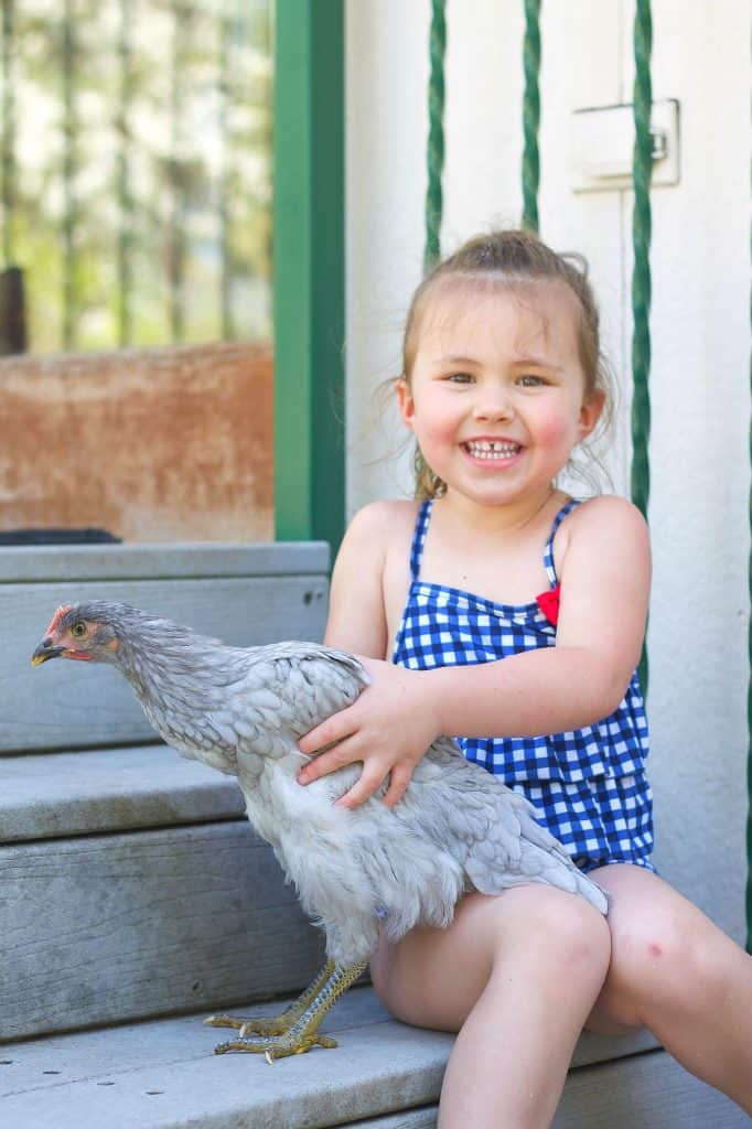 How to keep chickens: Tips from a farm girl turned city dweller