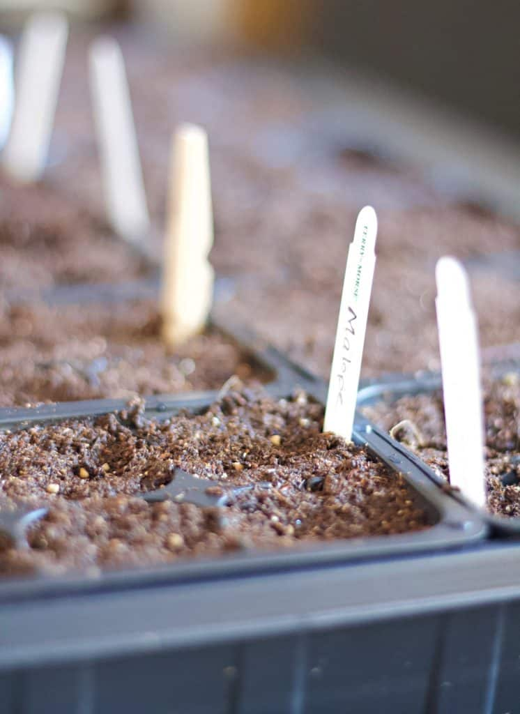 Start seeds indoors for a jump start on your gardening goals! Learn the tips and how-to's of beginning your seeds inside and how and when to transplant.