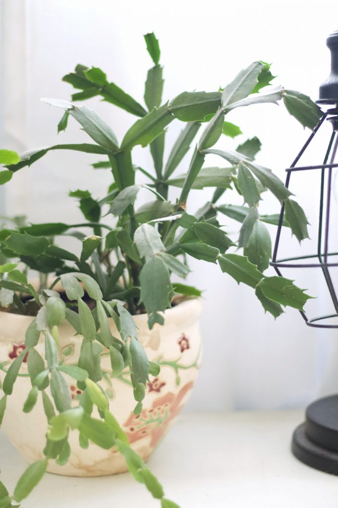 These easy indoor plants are great for anyone who wants live indoor plants, but also wants to avoid the high maintenance varieties. #indoorplants