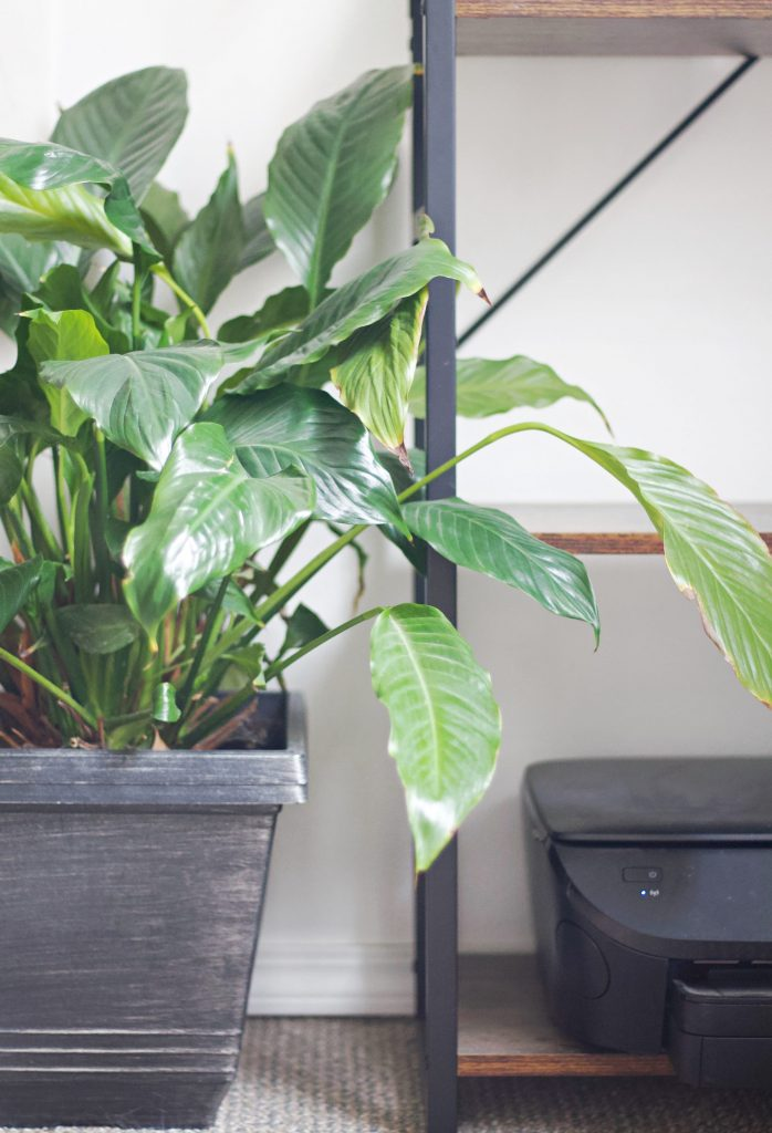 These easy plants are great for anyone who wants live indoor plants, but also wants to avoid the high maintenance varieties.