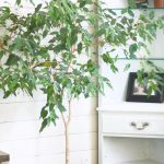 Easy Indoor Plants | No Need For A Green Thumb!