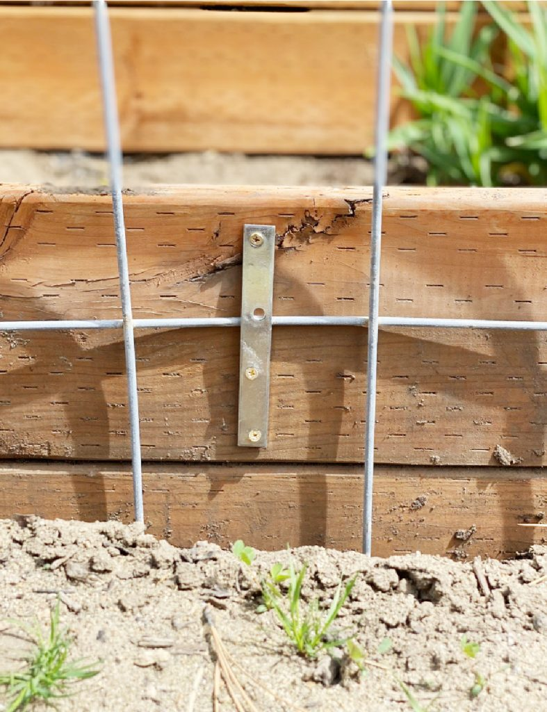 Cattle Panel Trellis is easy, cost effective, and a great long term solution to growing vining plants in your garden. It's easy to add, and won't break down over the years like wood trellis. Here's how to install it into your garden. #cattlepaneltrellis #gardentrellis