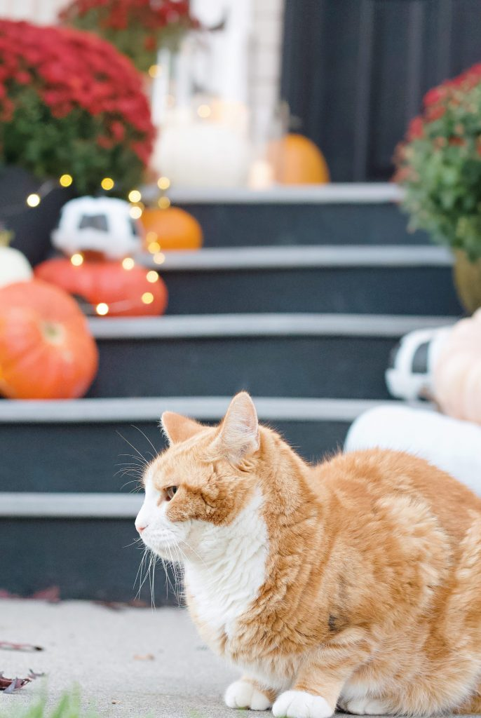 Ready to spruce up your porch for fall? Follow these 7 tips to get a cozy autumn porch you'll want to enjoy morning, noon, and night. #fallporch #falldecor